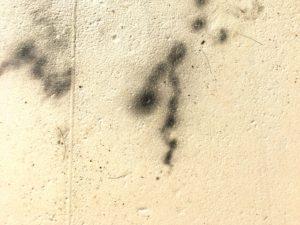 壁に発生しているカビ(真菌)
